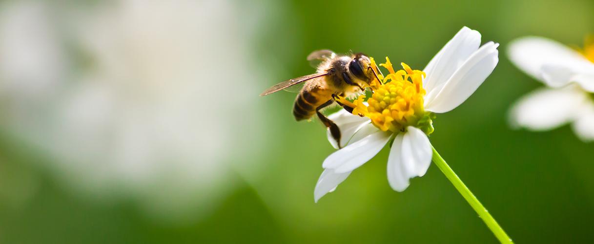 Hoe kun jij de bijen helpen?